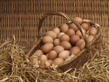 Basket of Eggs Photographic Print