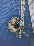 German Diver Goes Down Photographie