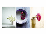 Zen Blossoms Triptych Poster