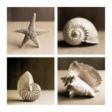 Sea Shells Four Patch Posters