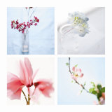 Petite Blossoms Four Patch Posters