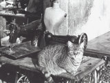 Cat, Sewing Machine and Manikin Photographic Print