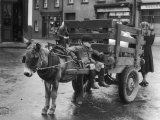 Small Boy Waits Patiently on a Donkey Cart in the Market Place at Kildare Co Kildare Ireland Stampa fotografica