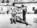 Two Men Carrying a Freshly-Caught Tuna. Palermo Fotografisk tryk