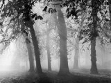 Autumn Mists a Scene Among the Trees in Abingdon Park Northampton Northamptonshire England Lámina fotográfica