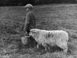 Little Boy Carring a Metal Pail of Feed is Followed by a Hungry Sheep! Fotografisk tryk