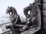 Detail of Two Monstrous Figures Located on a Terrace in the Cathedral of Notre-Dame, Paris Photographic Print