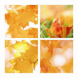 Autumn Maple Leaves Four Patch Premium Giclee Print