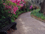 Pathway and Bench in Magnolia Plantation and Gardens, Charleston, South Carolina, USA Photographic Print by Julie Eggers