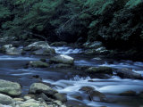The Little River, Great Smoky Mountains National Park, Tennessee, USA Photographic Print by William Sutton