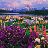 Iris and Lupine Garden and Teton Range at Oxbow Bend, Wyoming, USA Photographic Print by Adam Jones