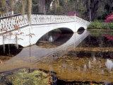 Long White Bridge over Pond, Magnolia Plantation and Gardens, Charleston, South Carolina, USA Photographic Print by Julie Eggers