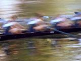 Crew Rowing, Seattle, Washington, USA Reproduction photographique par Terry Eggers
