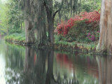 Charleston, South Carolina, USA Photographic Print by Adam Jones