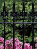 Wrought Iron Gate with Azaleas, Charleston, South Carolina, USA Photographic Print by Adam Jones