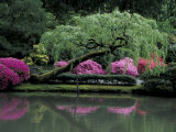 Reflecting pool and Rhododendrons in Japanese Garden, Seattle, Washington, USA Photographic Print by Jamie & Judy Wild