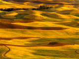 Harvest Time Fields, Palouse, Washington, USA Photographic Print by Terry Eggers