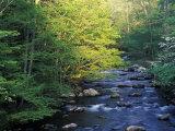 Elkmount Area, Great Smoky Mountains National Park, Tennessee, USA Lámina fotográfica por Gulin, Darrell