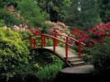 Red Bridge in Springtime, Koybota Gardens, Seattle, Washington, USA Photographic Print by Darrell Gulin