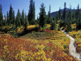 Beach Lake Trail with Fall Color, Mt. Rainier National Park, Washington, USA Photographic Print by Jamie & Judy Wild