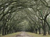 Moss-Covered Plantation Trees, Charleston, South Carolina, USA Fotodruck von Adam Jones