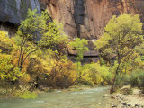 Virgin River in the Upper Zion Region, Zion National Park, Utah, USA Photographic Print by Jamie & Judy Wild