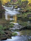 Autumn Color on Stream, Trout Lake, Washington, USA Fotodruck von William Sutton