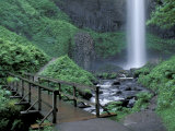 Falls from Foot Trail, Oregon Latourell Falls, Columbia River Gorge, Oregon, USA Photographic Print by Jamie & Judy Wild
