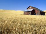 Old Barn in Wheatfield near Harvest Time, Whitman County, Washington, USA Photographic Print by Julie Eggers