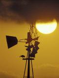 Harris Hawk Eating Prey on Windmill at Sunset, Brooks County, Texas, USA Photographic Print by Maresa Pryor