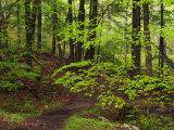 Forest Walkway, Great Smoky Mountains National Park, Tennessee, USA Lámina fotográfica por Adam Jones