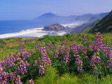 Lupine Flowers and Rugged Coastline along Southern Oregon, USA Fotografie-Druck von Adam Jones