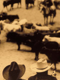 Cowboys at Indoor Rodeo, Fort Worth, Texas, USA Photographic Print by Walter Bibikow
