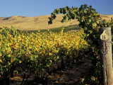 Yakima Valley Vineyards, Washington, USA Photographic Print by Jamie & Judy Wild