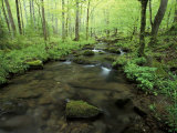 Small Stream in Dense Forest of Great Smoky Mountains National Park, Tennessee, USA Photographic Print by Darrell Gulin