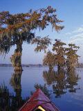 Kayak Exploring the Swamp, Atchafalaya Basin, New Orleans, Louisiana, USA Photographic Print by Adam Jones