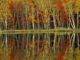 Fall Foliage and Birch Reflections, Hiawatha National Forest, Michigan, USA Photographic Print by Claudia Adams