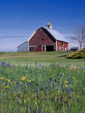 Old Red Barn with Spring Wildflowers, Grangeville, Idaho, USA Photographic Print by Terry Eggers