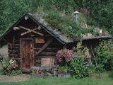 Kantishna Recorders Office, Denalia National Park, Alaska, USA Fotografie-Druck von Dee Ann Pederson