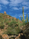 Saguaro Cactus in Sonoran Desert, Saguaro National Park, Arizona, USA Photographic Print by Dee Ann Pederson