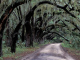 Live Oaks Line a Dirt Road, Cumberland Island, Georgia, USA Photographic Print by Gavriel Jecan