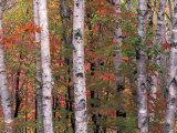 Forest Landscape and Fall Colors, North Shore, Minnesota, USA Photographic Print by Gavriel Jecan