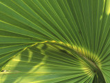 Cabbage Palmetto, Naples, Florida, USA Photographic Print by Rob Tilley