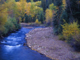 San Miguel River and Aspens in Autumn, Colorado, USA Photographic Print by Julie Eggers