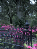 Bonaventure Cemetery, Savannah, Georgia, USA Photographic Print by Joanne Wells