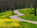 Roadway Through Mustard Flowers, Shaker Village of Pleasant Hill, Kentucky, USA Photographic Print by Adam Jones