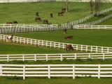 Thoroughbred Horses, Kentucky Horse Park, Lexington, Kentucky, USA Photographic Print by Adam Jones