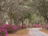 Bonaventure Cemetery with Moss Draped Oak, Dogwoods and Azaleas, Savannah, Georgia, USA Photographie par Joanne Wells