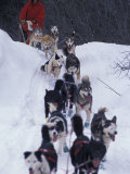 Dog Sled Racing in the 1991 Iditarod Sled Race, Alaska, USA Photographic Print by Paul Souders