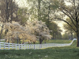 Dogwood Trees at Sunset Along Fence on Horse Farm, Lexington, Kentucky, USA Photographic Print by Adam Jones